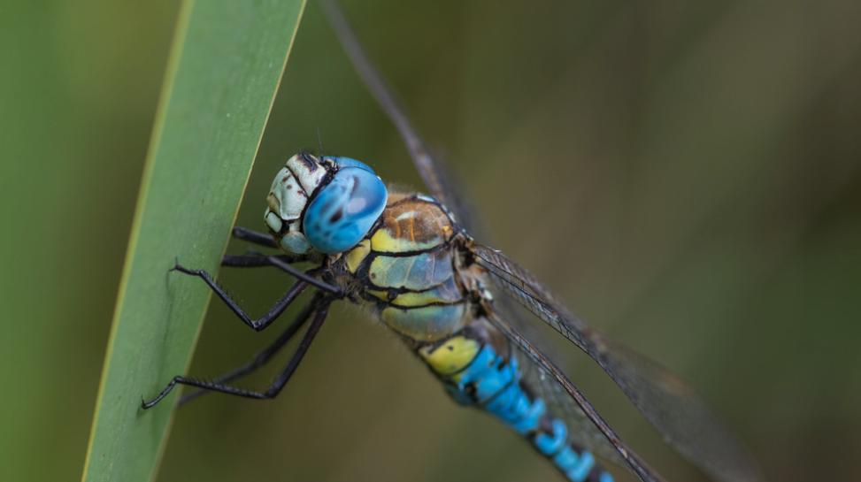 Interesting Invertebrates by Neil Philips